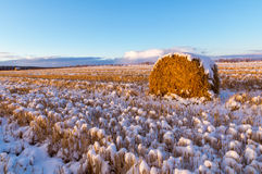 Rural field with cut grass and the first snow in Russia, Ural Stock Images