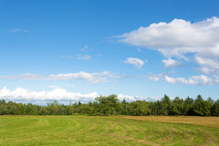Rural field with distant forest Stock Photos