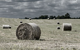 Rural field with fresh rolls of haystacks Stock Photos