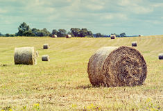 Rural field with fresh rolls of haystacks Stock Photography
