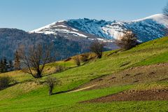Rural field on grassy slope under the blue sky. Mountain with snowy top far in the distance. beautiful springtime scenery Stock Photo
