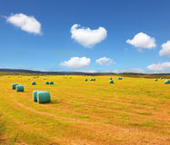 Rural field Royalty Free Stock Photography