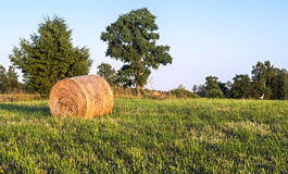 Rural field with haystacks Stock Images
