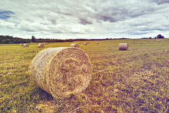 Rural field with haystacks Royalty Free Stock Photos