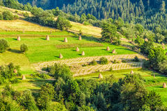 Rural field on hillside. Haystacks on rural hillside meadow near the forest Royalty Free Stock Photo