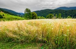 Rural field on hillside in mountains. Lovely rural landscape stock images