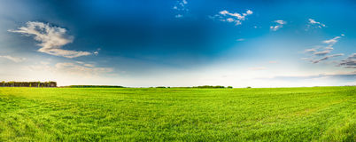 Rural Field Or Meadow Landscape With Green Grass Under Scenic Spring Stock Photography