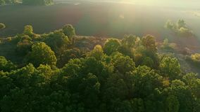 Rural field nature landscape aerial view sunrise. Rural field. Development growth opportunity. Nature landscape aerial view. Sunrise beams lens flare stock footage