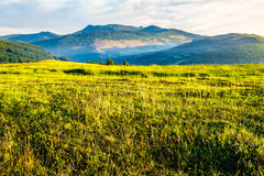 Rural field near forest at hillside. Summer counrtyside landscape with tree on meadow in mountains and haystacks on a far green slop Stock Photography