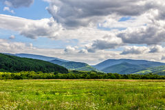 Rural field near forest on hillside. Summer countryside landscape with forest near the abandoned rural field Stock Photos