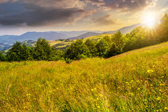 Rural field near forest at hillside at sunset. Summer counrtyside landscape with tree on meadow in mountains and haystacks on a far green slop in sunset light Royalty Free Stock Image
