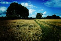 Rural field scene. A rural country scene in England Stock Photos