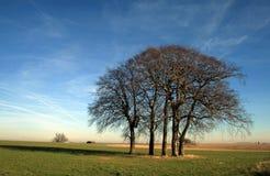 Rural field scene in Wiltshre. A rural country scene in wiltshire uk Stock Image