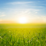 Rural field at the sunset. Green rural field at the sunset Royalty Free Stock Image