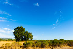 Rural field. With trees on a really nice day Royalty Free Stock Photo