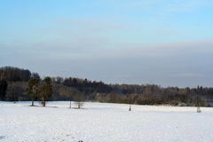 Rural field with tries. Winter rural field with tries Stock Photos