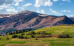 Rural fields on a grassy hillside in springtime. Mountain with snowy tops in the distance of beautiful countryside royalty free stock image