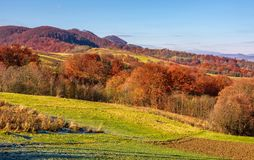 Rural fields on hills in autumn. Beautiful mountainous scenery with red foliage on trees Royalty Free Stock Image