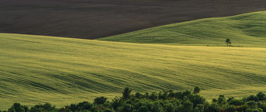 Free Rural Fields On A Sunny Day Stock Images - 31428514