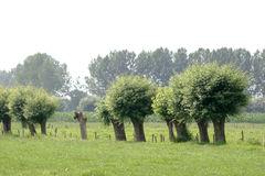 Rural flanders Royalty Free Stock Photos