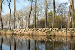 Rural Flanders in Belgium Royalty Free Stock Photos