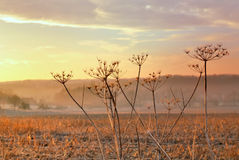 Rural flower at sunset Stock Image