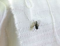 Rural fly. On white cloth Royalty Free Stock Images