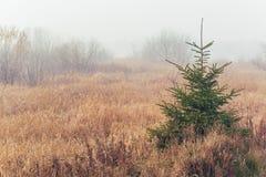 Rural Fog Royalty Free Stock Image