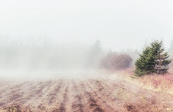 Rural Fog Royalty Free Stock Photos