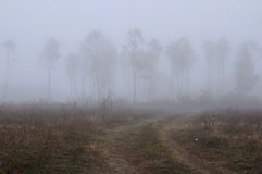 Rural Foggy Landscape in the Fall Stock Photos