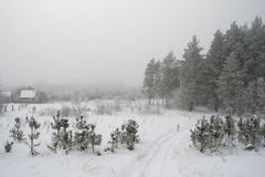 Rural foggy landscape Royalty Free Stock Images
