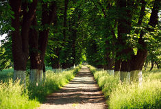 Rural footpath in trees, nature background summer park Royalty Free Stock Photos