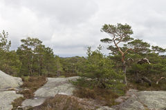 Rural forest in norway Royalty Free Stock Image