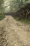 Rural forest road Stock Photos