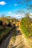 Rural, forest road, descend between garden and forest autumn, November, Slovakia.  Royalty Free Stock Images