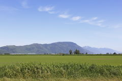 Rural Fraser Valley Royalty Free Stock Photography