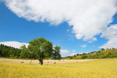Rural French landscape Stock Photography