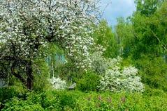 Rural garden. Stock Image