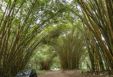Rural garden route with bamboo canopy Royalty Free Stock Photo