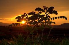 Rural golden sunset Royalty Free Stock Photos