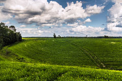 Rural grass field landscape royalty free stock photo
