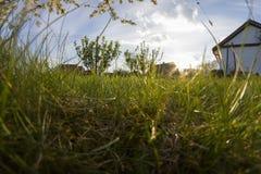 Rural grass Royalty Free Stock Image