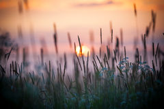 Rural grass on meadow Stock Photography