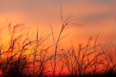 Rural grass and sunset sky. With black silhouette Royalty Free Stock Photos