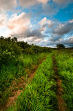 Rural grass way tracks at sunrise Royalty Free Stock Photo
