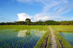 Rural and green crop fields and lanes stock photos