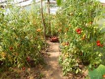 Rural greenhouse Royalty Free Stock Photos