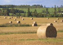Rural Hay Bales Royalty Free Stock Image