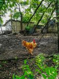Rural hen house made with wire plates stock photo