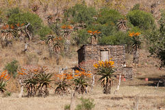 Rural home in South Africa. Wattle, daub and mud home in rural South Africa Stock Image